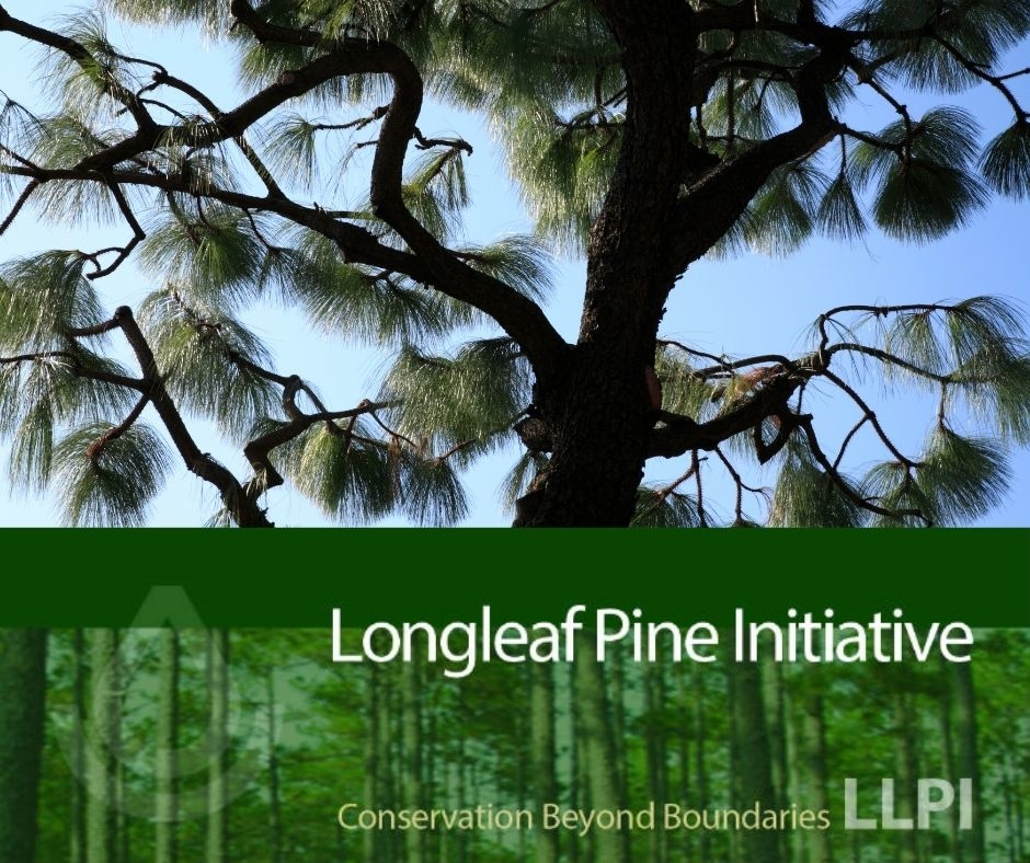 2nd sign up opportunity for Mississippi Longleaf Pine Initiative